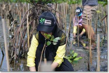 menamam mangrove